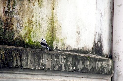 A bird in the psychiatric prison-hospital, Brazil