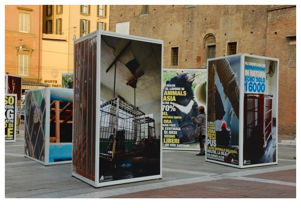 Exhibition on stopping bile extraction from moon bears