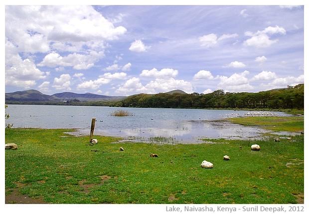 Oloiden lake, Naivasha, Kenya - images by Sunil Deepak, 2012