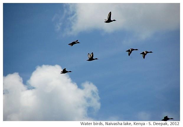 Water birds, False bay, South Africa - S. Deepak, 2012