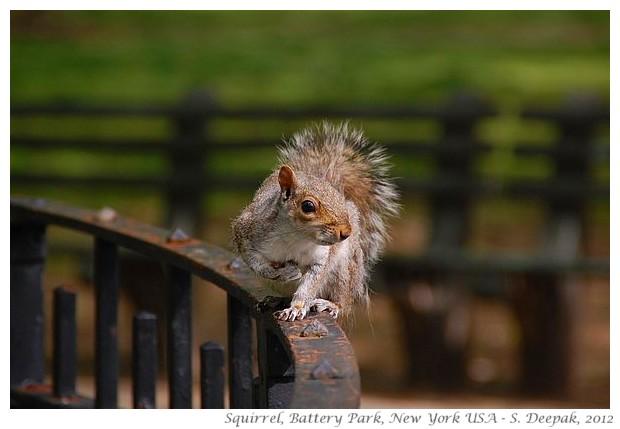 Squirells, New York - S. Deepak, 2012