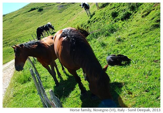 Horse family, Novegno, Schio (VI), Italy - images by Sunil Deepak