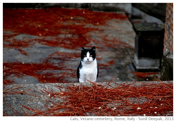 Cats, Verano cemetery, Rome, Italy - images by Sunil Deepak, 2013