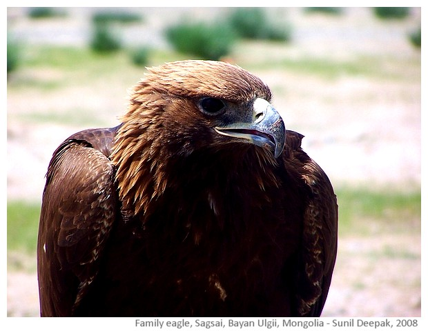 Pet eagle, Sagsai, Bayan Ulgii, Mongolia - images by Sunil Deepak, 2008