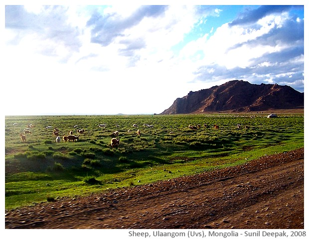 Sheep pastures, Ulaangom, Uvs, Mongolia - images by Sunil Deepak, 2008