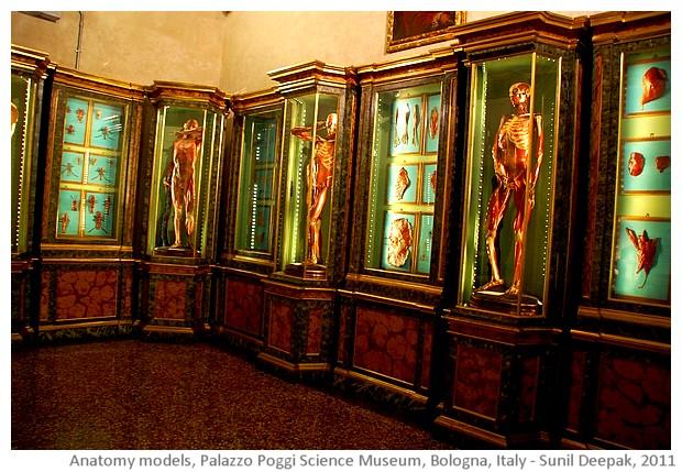Anatomy models, Palazzo Poggi, Bologna, Italy - images by Sunil Deepak, 2014