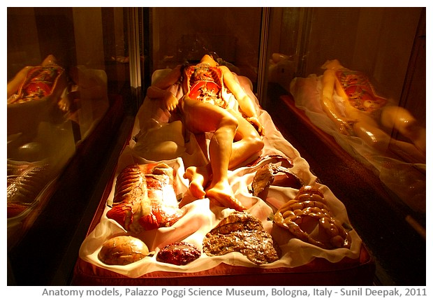Arre Kya Baat Hai: Baby in the womb - Amazing anatomy models