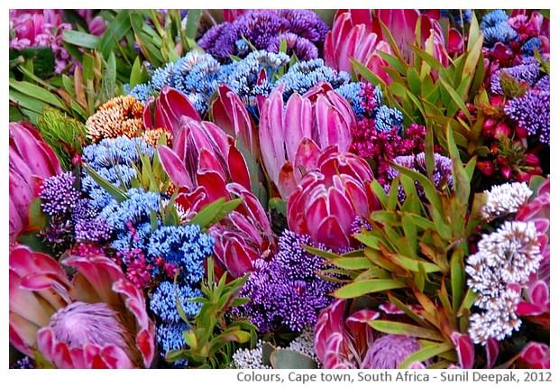 Colours, Flowers, Cape Town, South Africa - images by Sunil Deepak, 2012