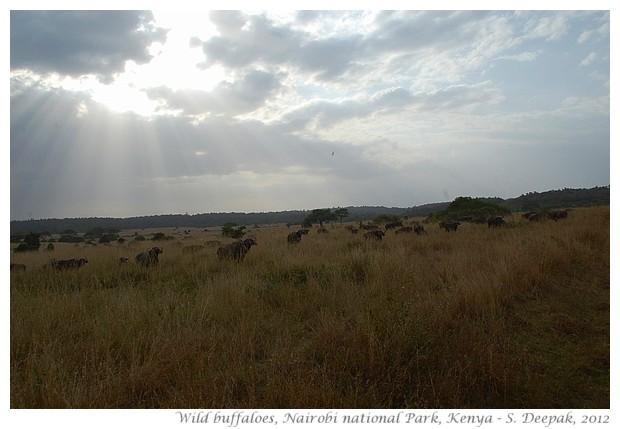 Nairobi National Park animals, Kenya