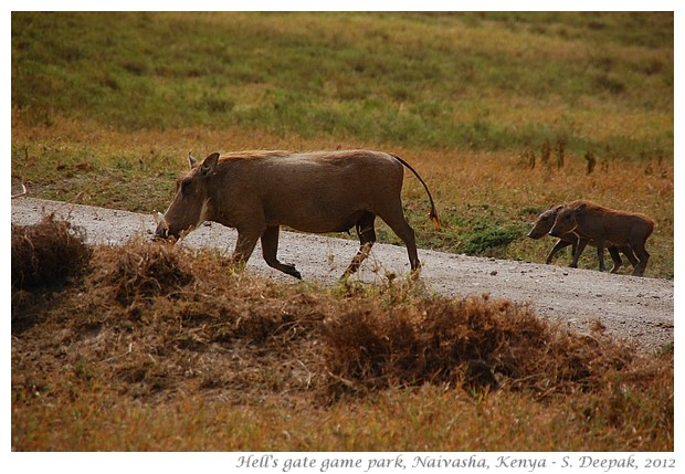 Images from Kenya travel, Sept 2012 - S. Deepak, 2012