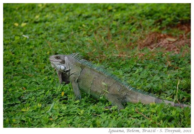 best of nature and wildlife pictures - S. Deepak, 2011