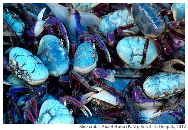 Blue crabs, Abaeteuba, Parà, Brazil - S. Deepak, 2012