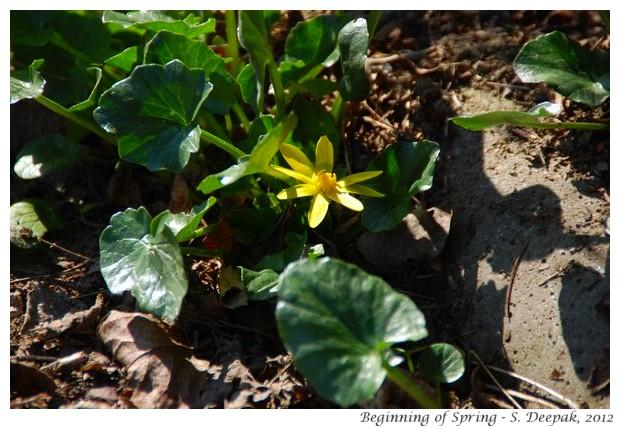 Beginning of spring, Bologna, Italy - S. Deepak, 2012