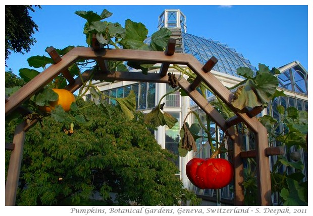 Red pumpkins, Geneva Botanical garden, Switzerland - S. Deepak, 2011