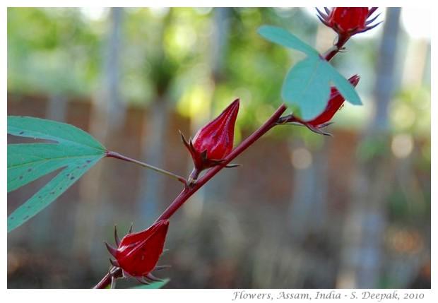 Flowers, Boko, Assam India - images by S. Deepak