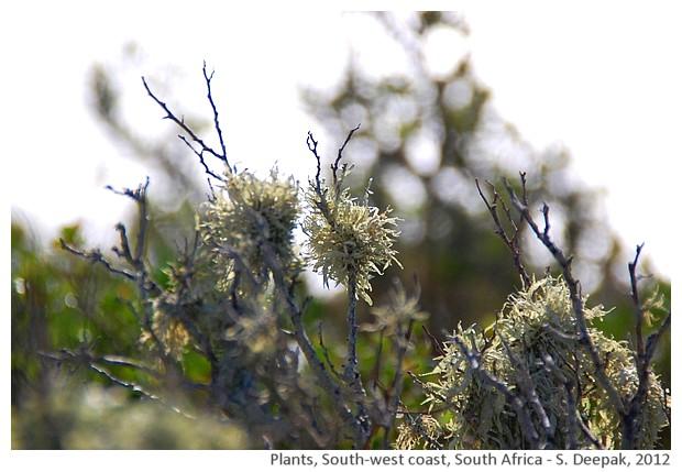 Wild plants, south africa - S. Deepak, 2012