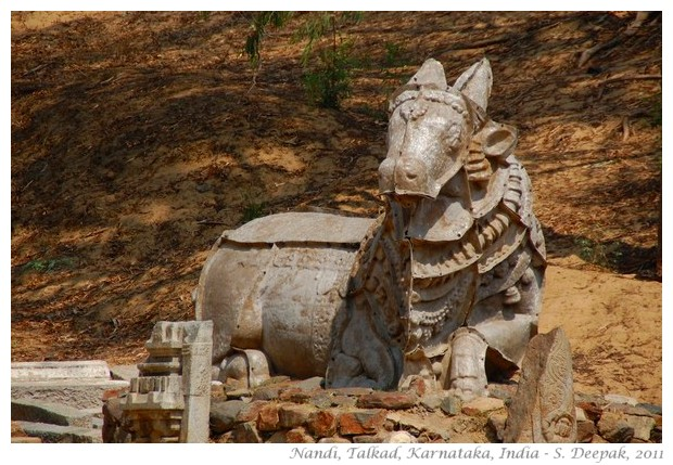 The sacred Nandi bull from temples in Talkad, India - S. Deepak, 2011