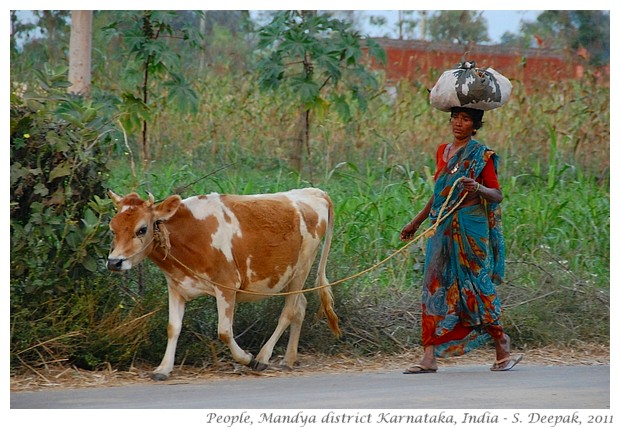 Village life, Mandya district, Karnataka, India - S. Deepak, 2012