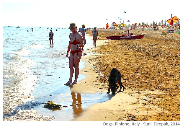 Black dogs, Bibione, Italy - images by Sunil Deepak, 2014