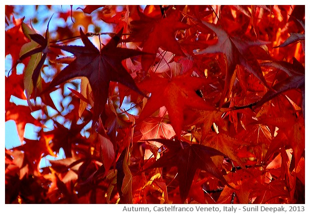Autumn, Castelfranco Veneto, Italy -images by Sunil Deepak, 2013