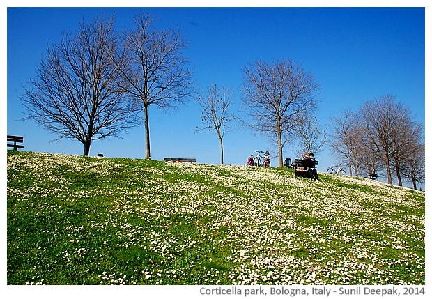 White flowers of spring, Corticella park, Bologna - images by Sunil Deepak, 2014