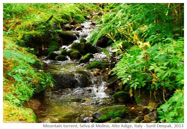 Selva di Molino, Alto Adige, Italy - images by Sunil Deepak, 2013