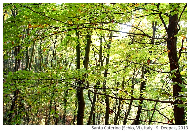 Nature, Santa Caterina Schio VI, Italy - S. Deepak, 2013