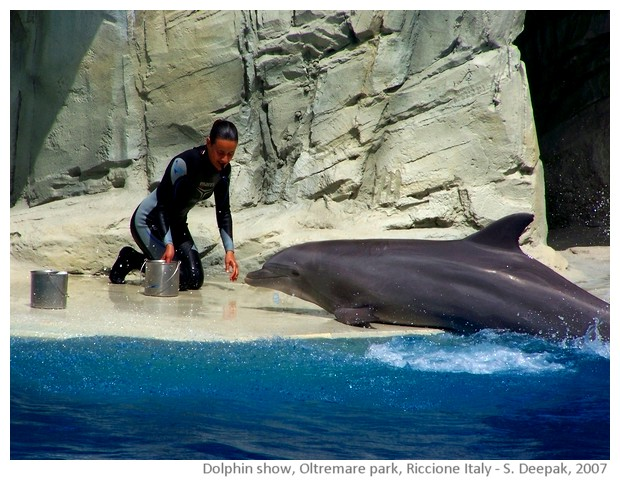 Dolphin show, Oltremare amusement park, Riccione, Italy - images by Sunil Deepak, 2007
