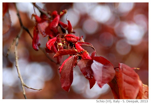 Changing colours of seasons, Schio, Italy - images by Sunil Deepak, 2013