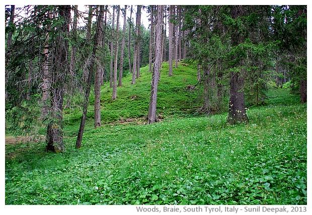 Woods in Braie, South Tyrol, Italy - images by Sunil Deepak, 2013