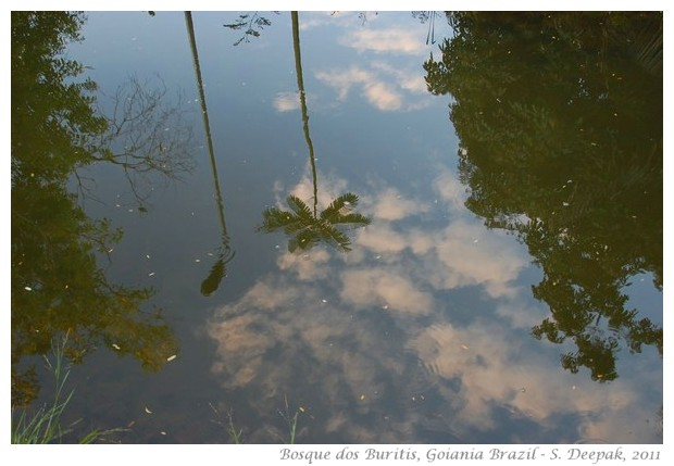 Lake at Bosque dos Buritis, Goiania (Goias), Brazil - images by S. Deepak
