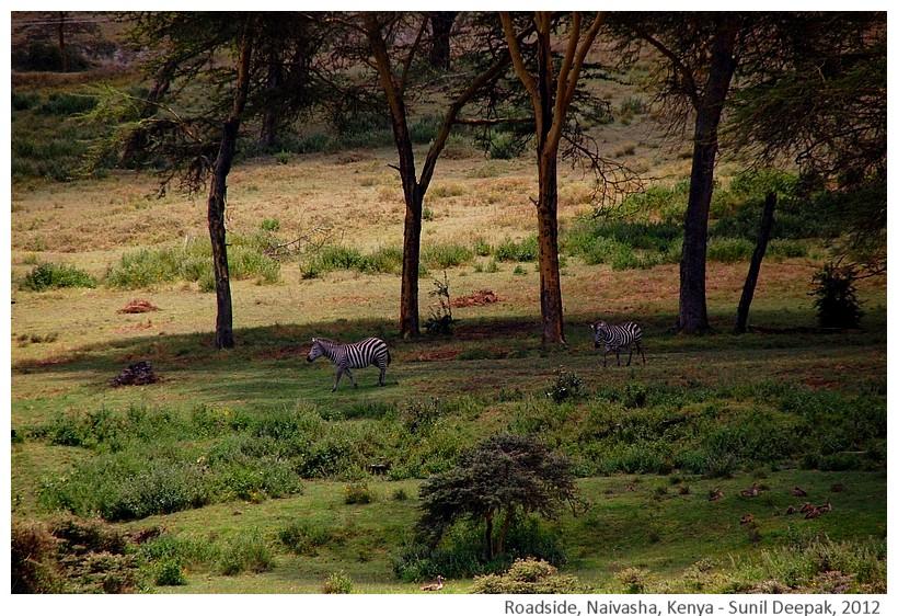 Deer, Naivasha, Kenya - Sunil Deepa, 2012
