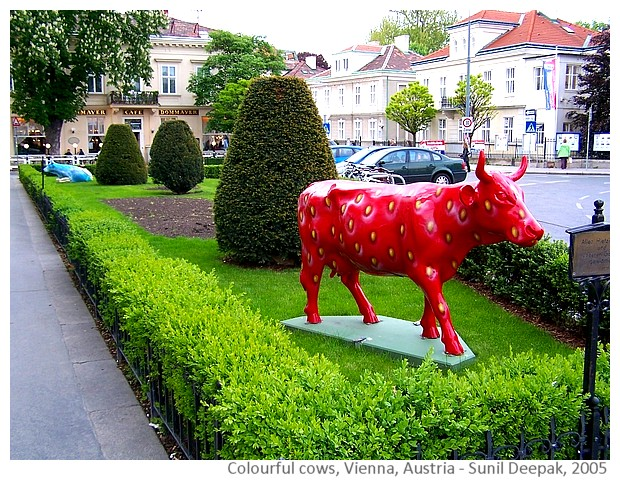Colourful cow sculptures - Vienna Austria - images by Sunil Deepak, 2014