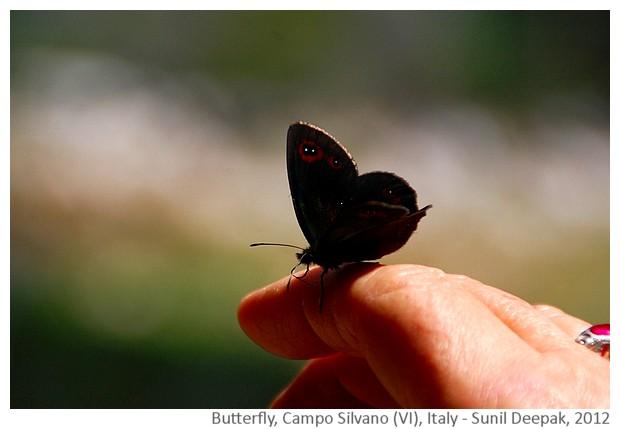 Butterfly, Veneto, Italy - image by Sunil Deepak, 2012