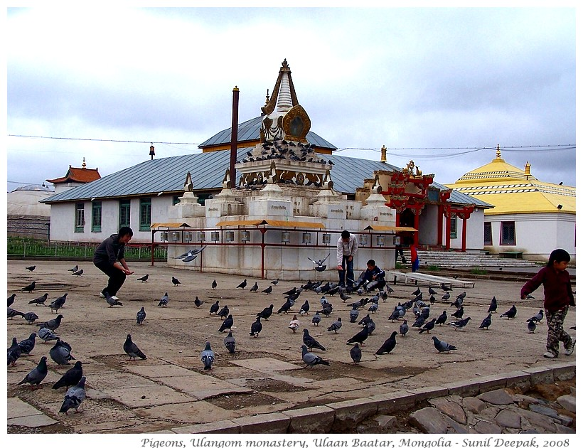 Pigeons, Ulangom monstery, Mongolia - Images by Sunil Deepak