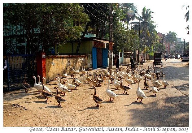 Introduction to Guwahati, Assam, India - Images by Sunil Deepak
