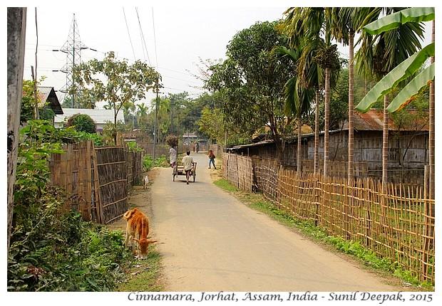 Maniram Dewan & Cinnamara tea gardens, Jorhat, Assam, India - Images by Sunil Deepak