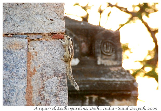 Jorbagh Metro Station walks - Lodhi garden, Safdarjung tomb - Images by Sunil Deepak