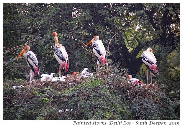 essay for lucknow zoo The essay highlights her scientific and global approach to solving the present day problems  have adopted the wild peacock of lucknow zoo.