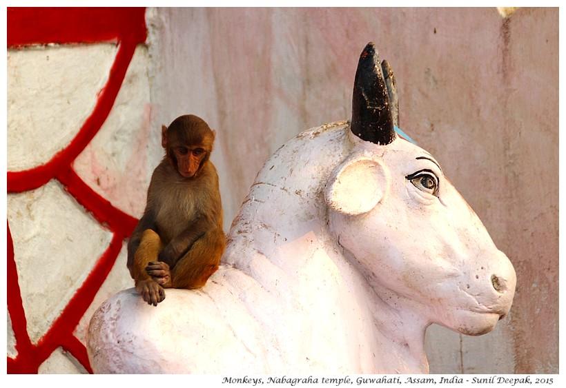 Nabagraha temple, Guwahati, Assam, India - Images by Sunil Deepak