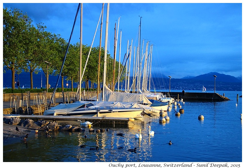 Boats & swans, Ouchy port, Lousanne, Switzerland - Images by Sunil Deepak