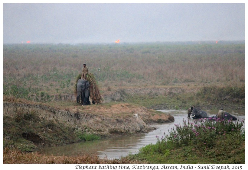 Bath domesticated elephants and forest fires, Kaziranga, Assam, India - Images by Sunil Deepak