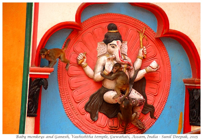 Baby monkeys on Ganesh statue, Vashishtha temple, Guwahati, Assam, India - Images by Sunil Deepak, 2015