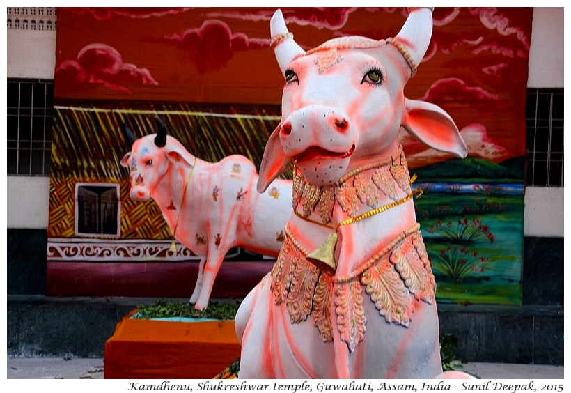 Kamdhenu, Shukreshwar temple, Guwahati, Assam, India - Images by Sunil Deepak