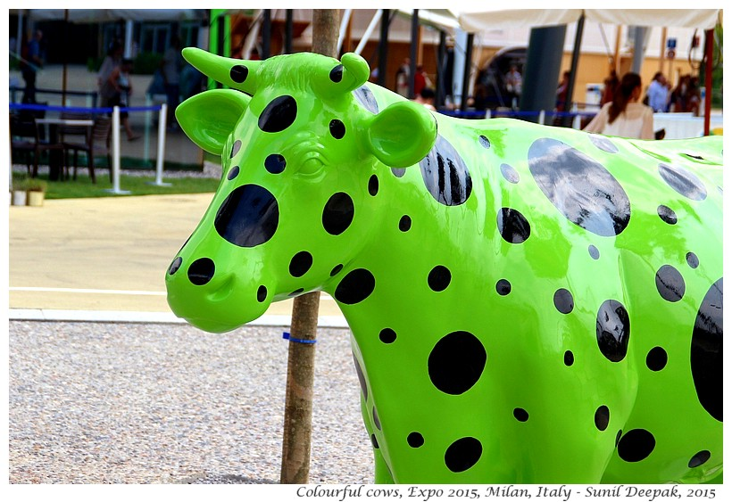 Colourful cows, Expo 2015, Milan, Italy - Images by Sunil Deepak