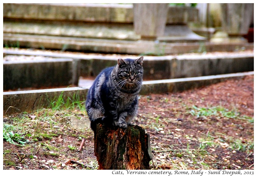 Cats, Verano cemetery, Rome, Italy - Images by Sunil Deepak