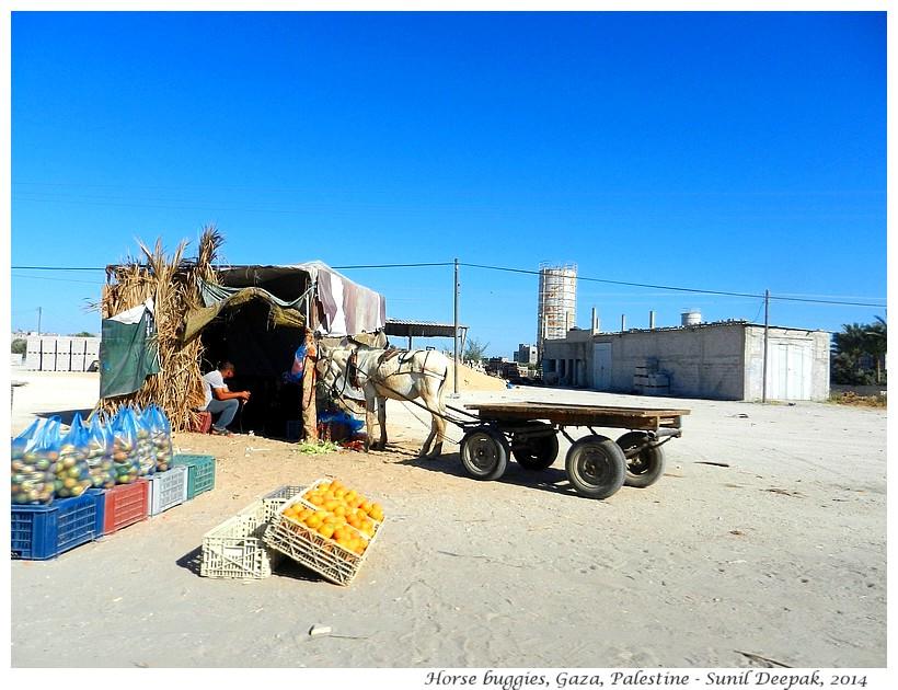 Horse carts, Gaza, Palestine - Images by Sunil Deepak