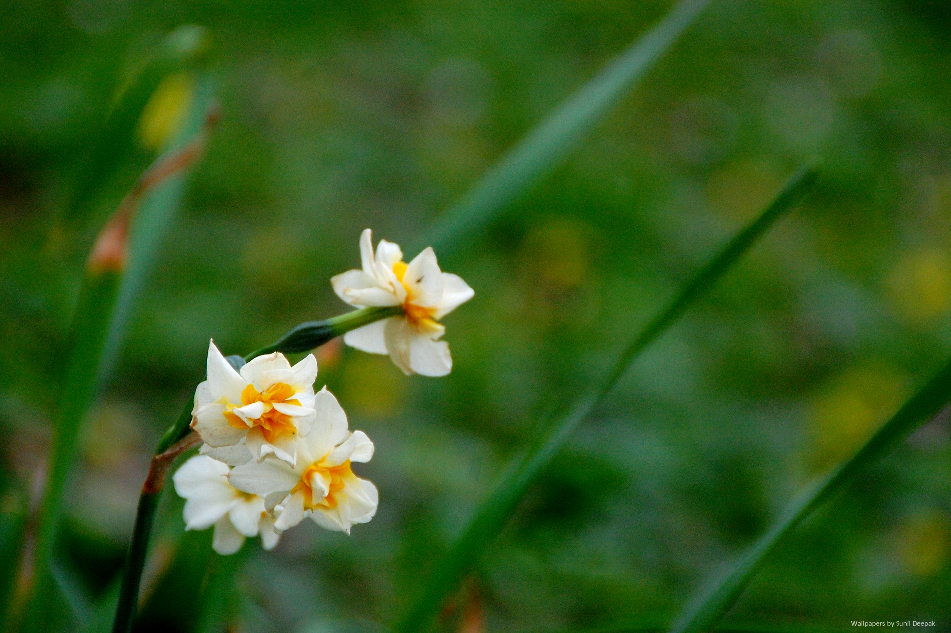 Free high resolution wallpapers - Spring flowers 2014 ...
