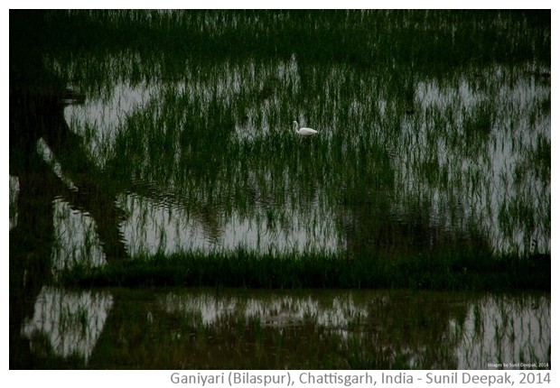 Free High resolution Wall-papers from Bilaspur District, Chattisgarh, India - Images by Sunil Deepak