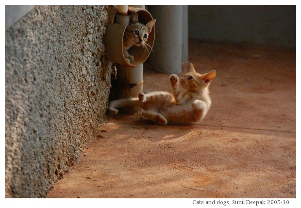 Cats And Dogs From Different Parts Of The World Kalpana